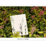 Chinese Painting Set of 12 Postcards Large PSC073