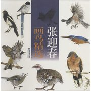 张迎春画鸟精选 <em>Chinese</em> Bird Painting Selection by Zhang Yingchun